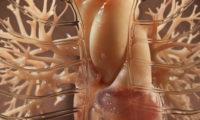 细胞分子微生物三维器官模型动画