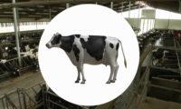 农业畜牧业虚拟演示动画制作